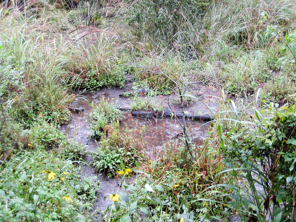 池あるいは小川だったであろう場所
