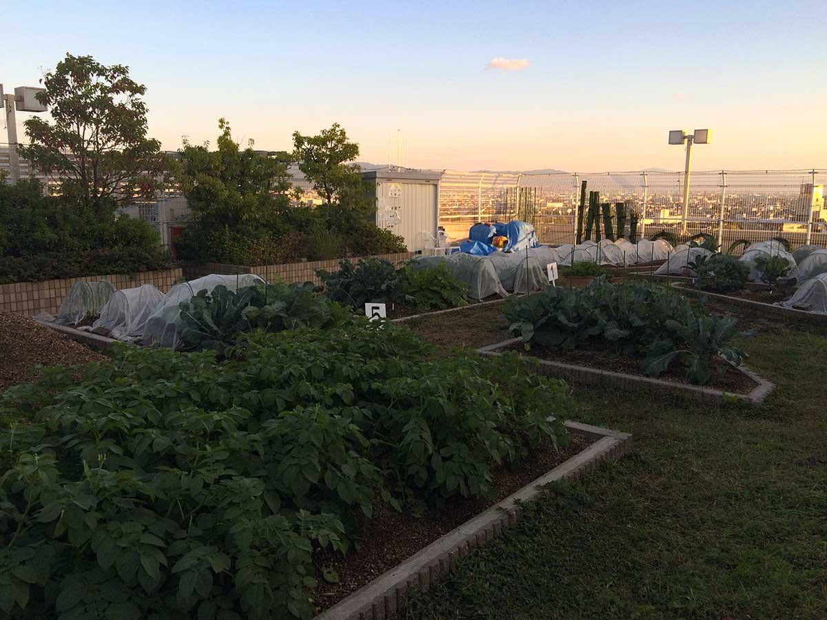屋上の菜園