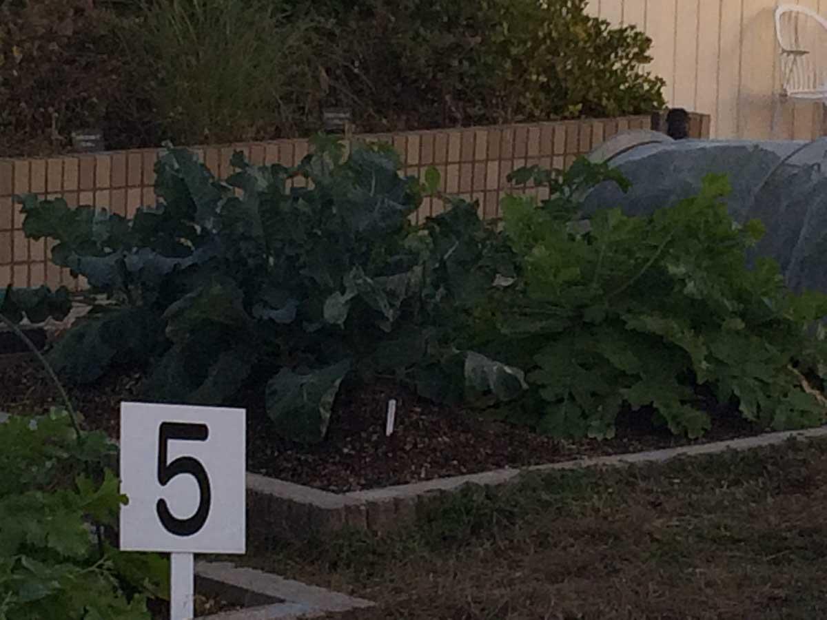 番号つきの菜園
