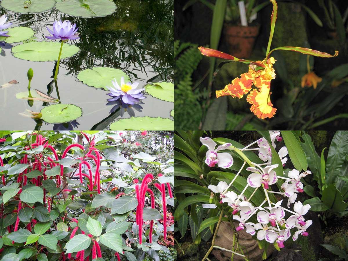 南国の花1
