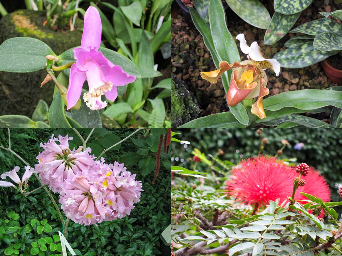 南国の花2