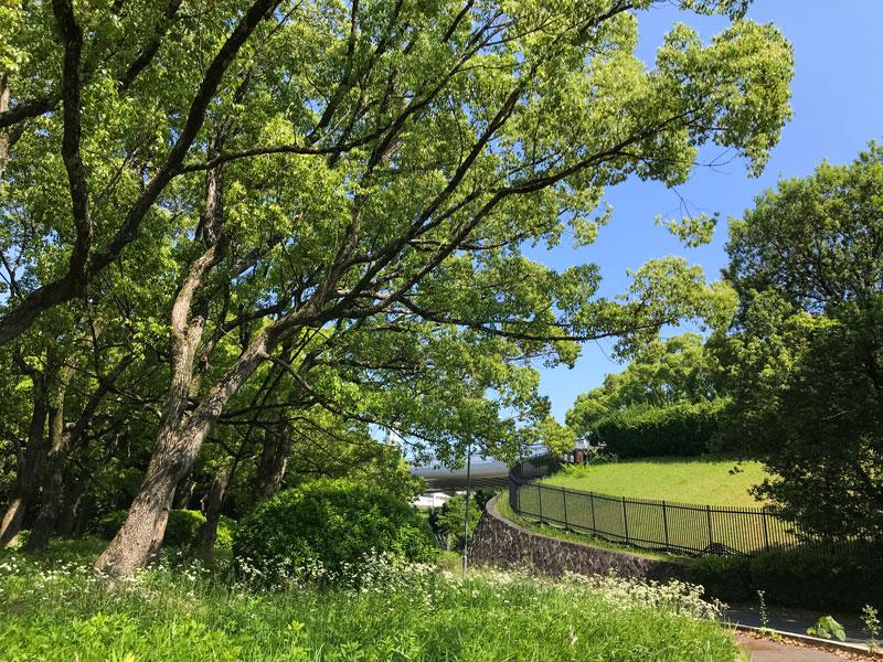 万博公園の青空