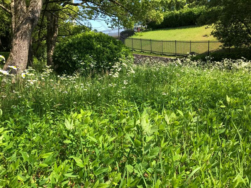 生い茂る万博の草