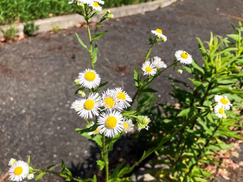 万博公園の白い花