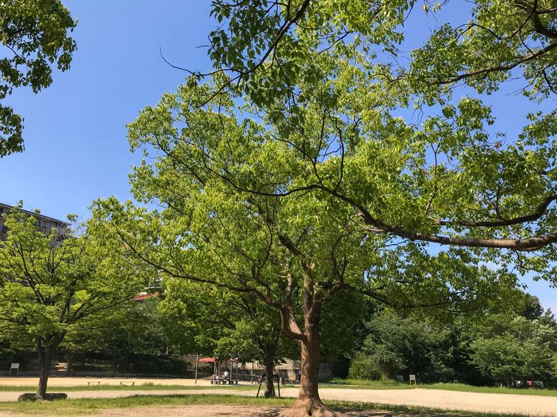 紫金山公園の広場